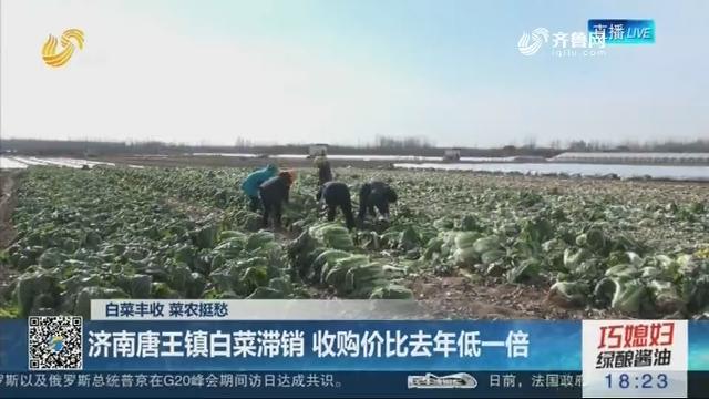 【白菜丰收 菜农挺愁】济南唐王镇白菜滞销 收购价比去年低一倍