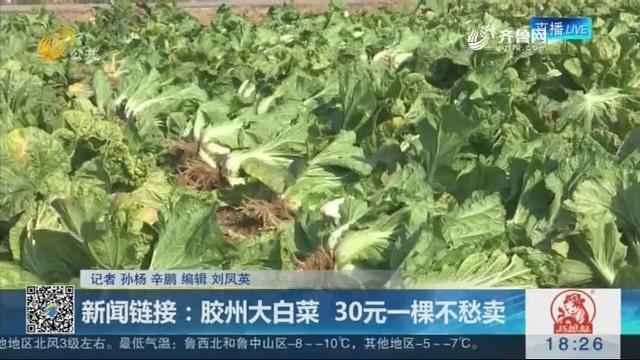 新闻链接:胶州大白菜 30元一棵不愁卖