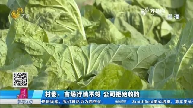 德州:天气渐冷 一百多万斤滞销白菜愁坏村民