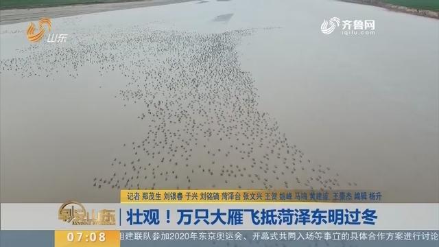 【闪电新闻排行榜】壮观!万只大雁飞抵菏泽东明过冬