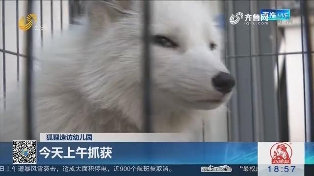 【狐狸造访幼儿园】济南:17日上午抓获