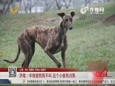 济南:半夜偷狗狗不叫 这个小偷有点熟