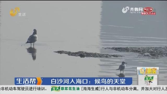 青岛:白沙河入海口 候鸟的天堂