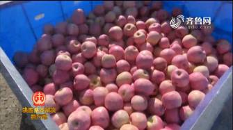 《法院在线》12-22播出:《苹果收获季 执行老赖时》