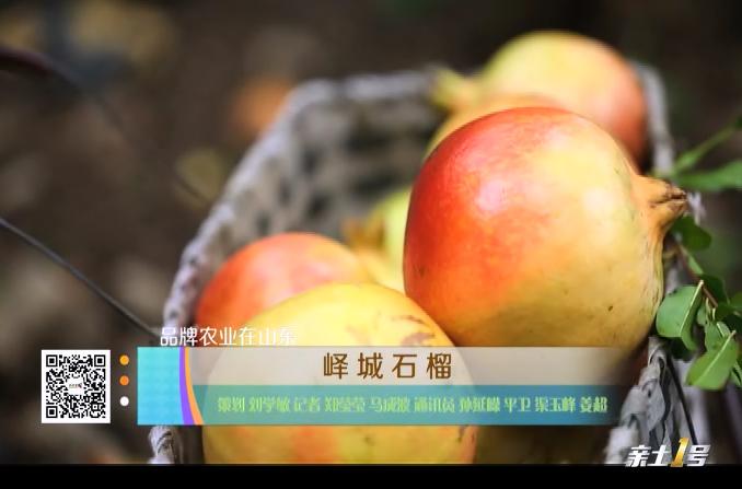 【品牌农业在山东】峄城石榴