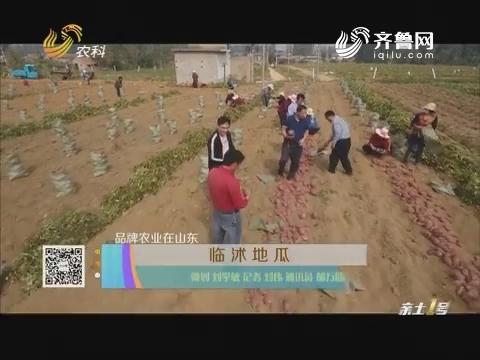 【品牌农业在山东】临沭地瓜