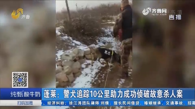 蓬莱:警犬追踪10公里助力成功侦破故意杀人案