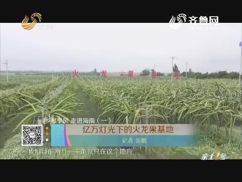 【乡村季风 走进海南(一)】亿万灯光下的火龙果基地