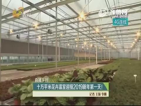 【直播乡村】十万平米花卉温室迎接2019新年第一天!