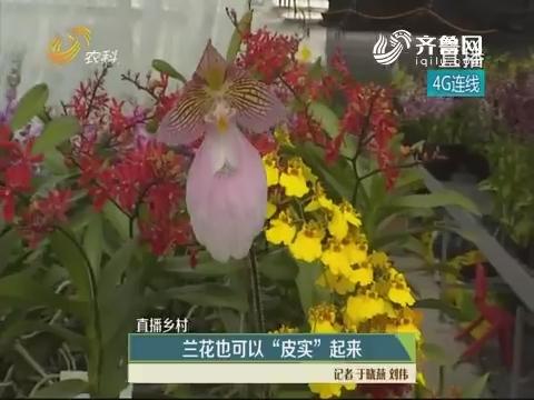 """【直播乡村】兰花也可以""""皮实""""起来"""