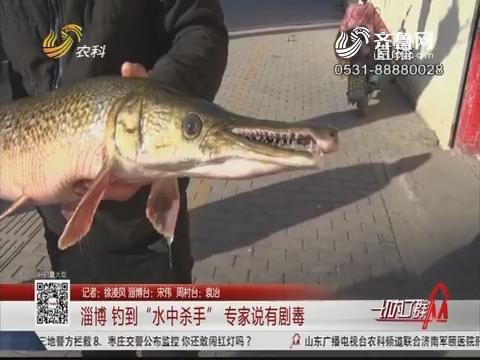 """淄博:钓到""""水中杀手""""专家说有剧毒"""
