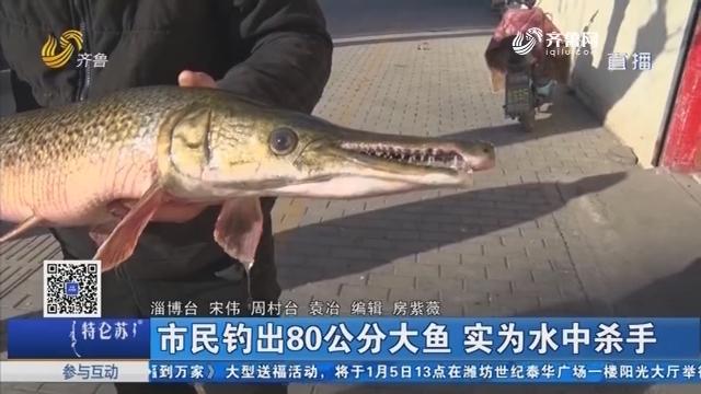 淄博:市民钓出80公分大鱼 实为水中杀手