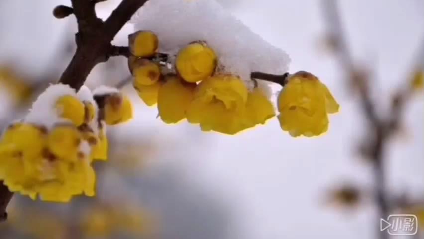 诗朗诵:《走向春天》作者/朗诵:郭玲玲