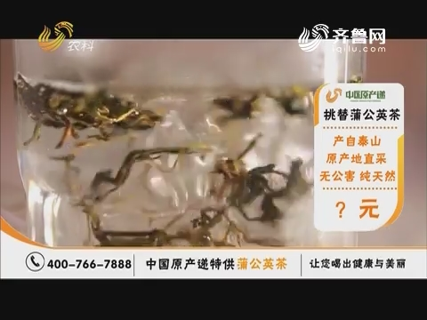 20190105《中国原产递》:蒲公英茶