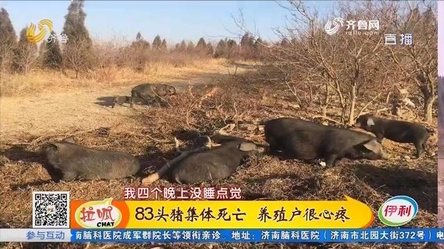青州:83头猪集体死亡 养殖户很心疼