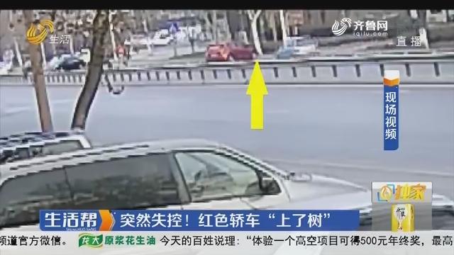 """淄博:突然失控!红色轿车""""上了树"""""""