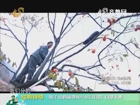 20190109《中国原产递》:临朐柿饼