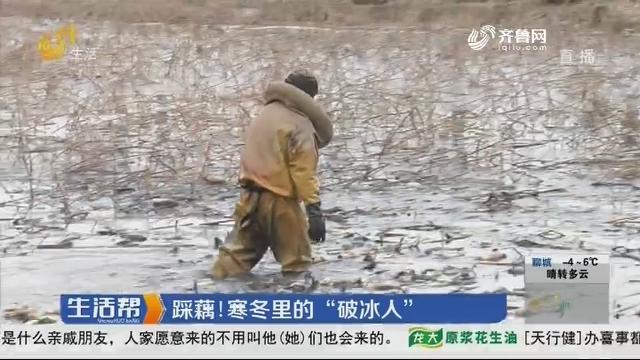 """济南:踩藕!寒冬里的""""破冰人"""""""