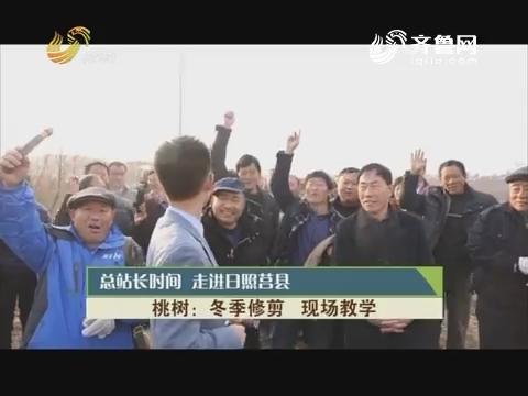 20190113《总站永劫间》:走进日照莒县 桃树 夏季修剪 现场讲授