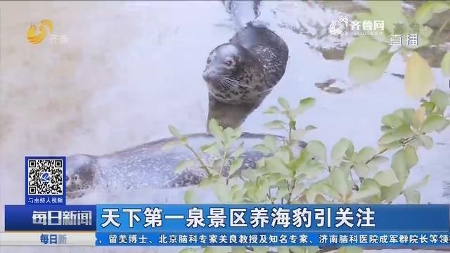 济南:天下第一泉景区养海豹引关注