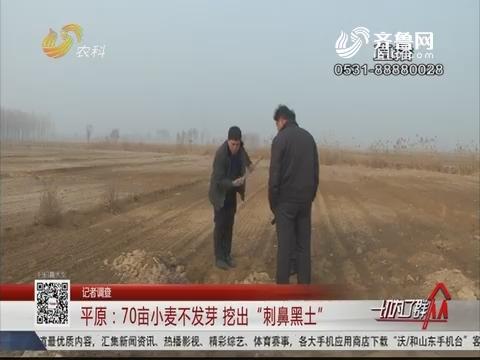 """【记者调查】平原:70亩小麦不发芽 挖出""""刺鼻黑土"""""""