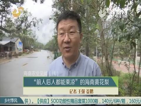 """【海南农业见闻(八)】""""前人后人都能乘凉""""的海南黄花梨"""