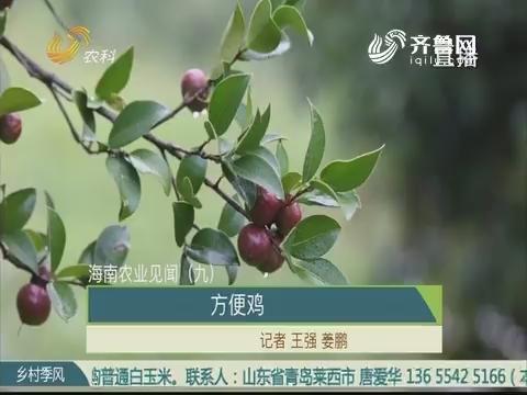 【海南农业见闻(九)】:方便鸡