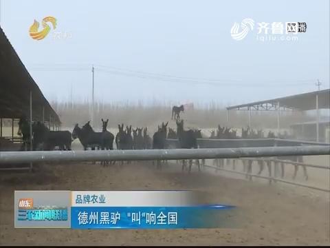 """【品牌农业】德州黑驴 """"叫""""响全国"""