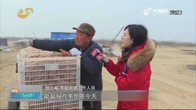【走齐鲁 看样板】广饶:发展家庭农场 带动村民就业