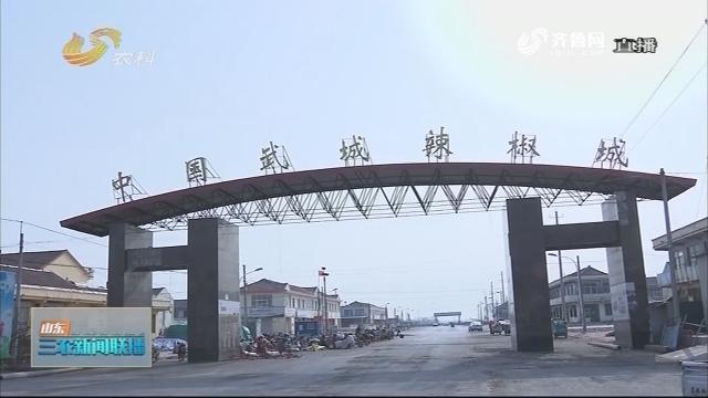 """【财政支农】武城:价格上""""保险""""椒农更放心"""