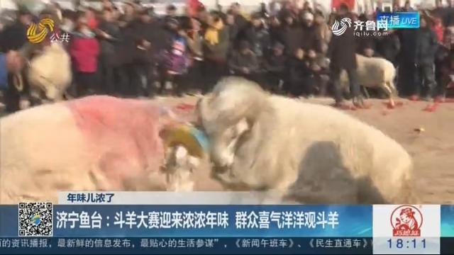 【年味儿浓了】济宁鱼台:斗羊大赛迎来浓浓年味 群众春风得意观斗羊