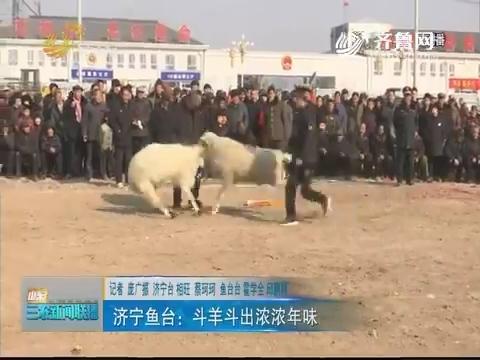 【俺村年味浓】济宁鱼台:斗羊斗出浓浓年味