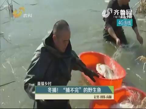 """【直播乡村】冬捕!""""捕不完""""的野生鱼"""