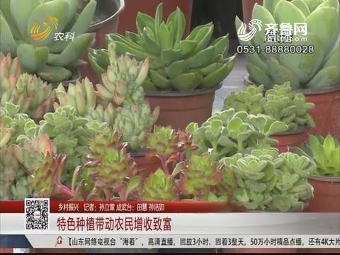 【乡村振兴】成武:特色种植带动农民增收致富