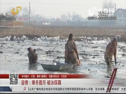 【乡村振兴】淄博:寒冬腊月 破冰踩藕