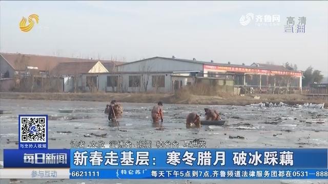 【淄博】新春走基层:寒冬腊月 破冰踩藕