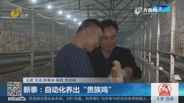 """新泰:自动化养出""""贵族鸡"""""""