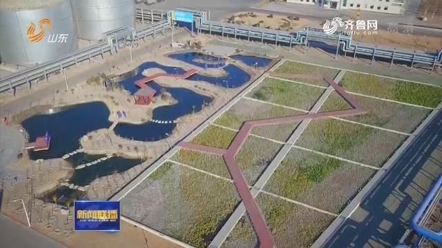 【环保督察整改再落实】淄博:石化厂里建起人工湿地