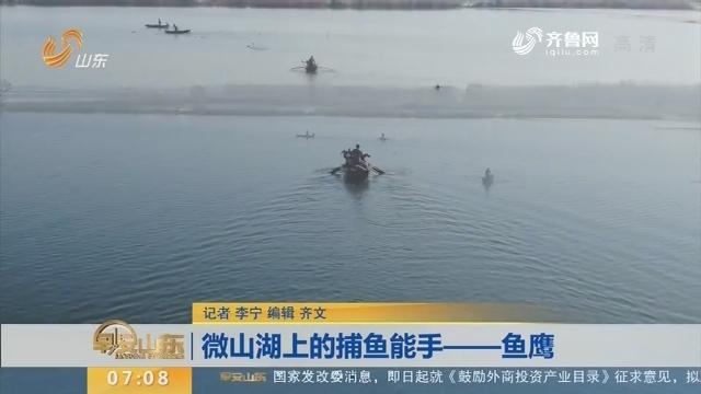 【闪电新闻排行榜】微山湖上的捕鱼能手——鱼鹰