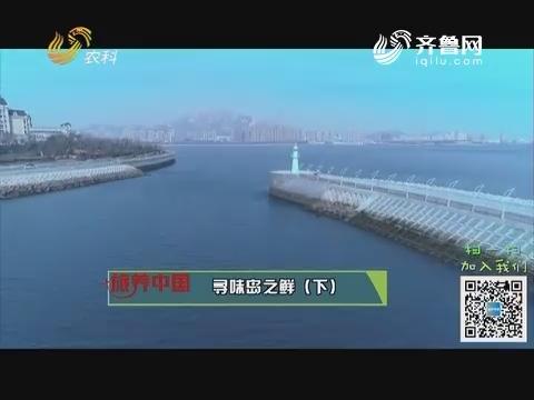 20190208《旅养中国》:寻味岛之鲜(下)