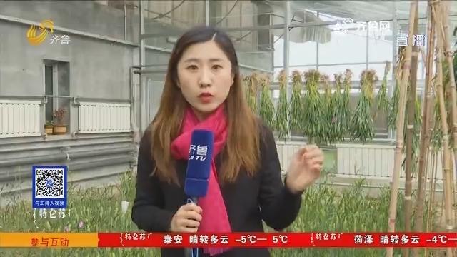 淄博:人勤春早!这里的小麦收割忙