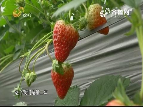 """建德草莓小镇里的高科技""""武器"""""""