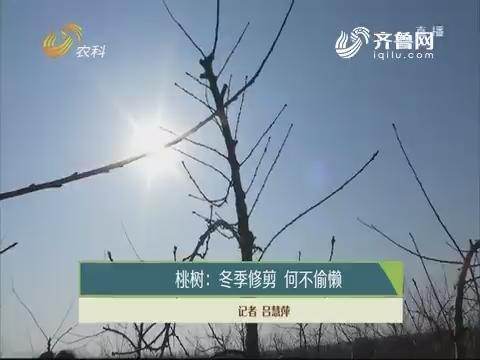 桃树:冬季修剪 何不偷懒