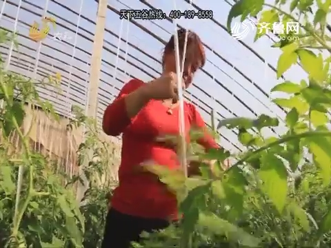 【天下五谷·果蔬保姆在行动】以棚为家 蔬菜大棚话幸福