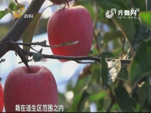"""果树:用""""良方""""减病虫"""