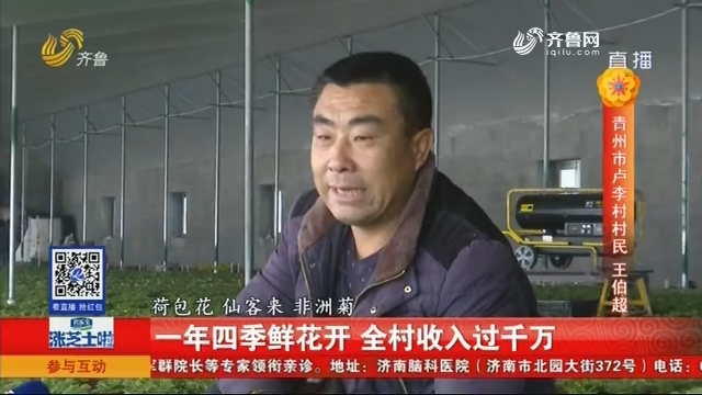 青州:一年四季鲜花开 全村收入过千万
