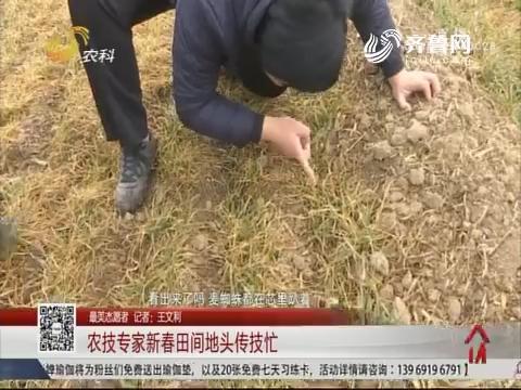 【最美志愿者】农技专家新春田间地头传技忙