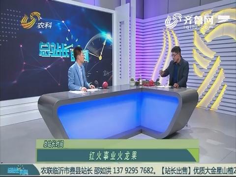 20190224《总站长时间》:红火事业火龙果