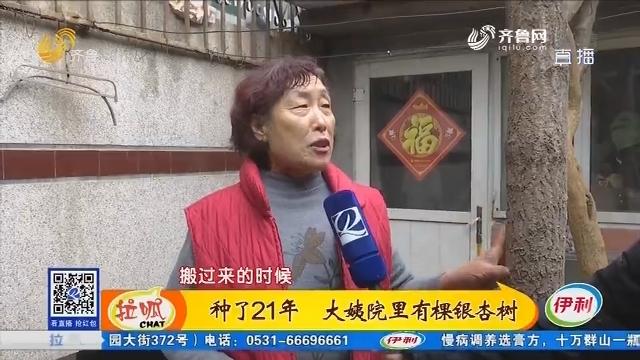 济南:种了21年 大姨院里有棵银杏树