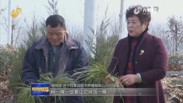 【山东好人】谢明珠:发展油用牡丹 带动村民脱贫致富